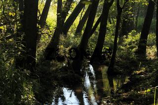 Erlenbruchwald, Nationalpark Unteres Odertal