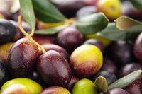 Fresh olives.