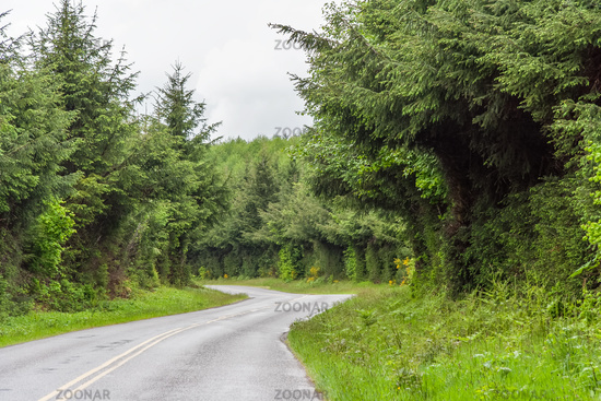 Road between Green lush plants of temperate rainforest at Olympic National Park Washington USA