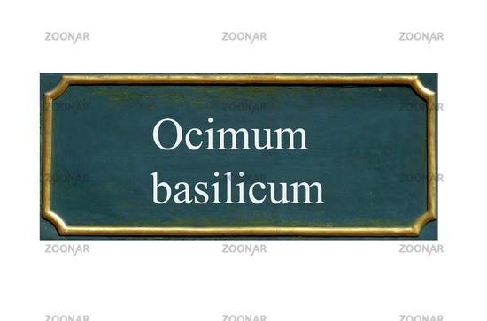 shield ocimum basilicum
