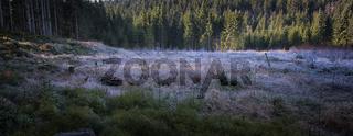 Waldwiese mit Raureif