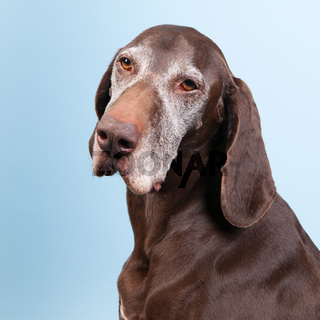 Portrait old dog
