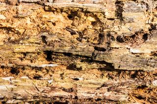 Old bark detail