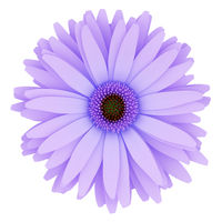 top view of purple flower isolated on white background