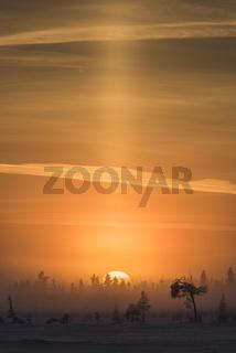 Winterlandschaft im Nebel, Lappland