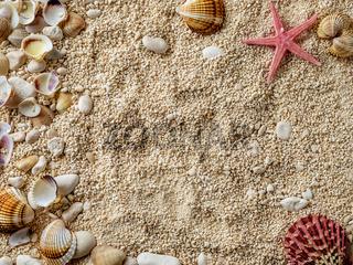 Sea shells on the sea pebbles