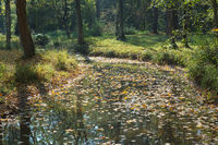 Woodland Creek in Autumn