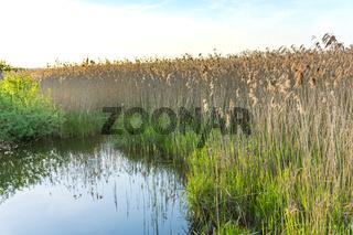 Landschaft am Dümmer See-75