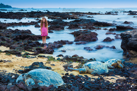 Little girl exploring a volcanic rocky shore with green sea turtles resting  in Hawaii. The focus is on turtles