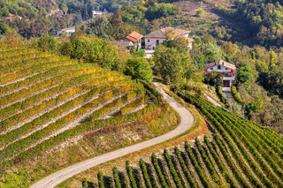 Vineyards on the hills in Piedmont, Italy.