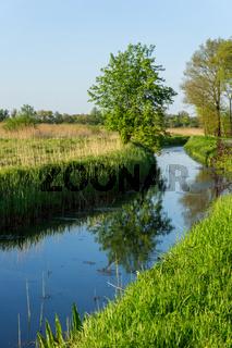 Landschaft am Dümmer See-56