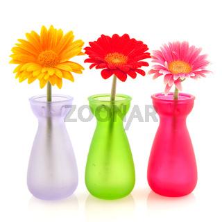 Colorful Gerber flowers