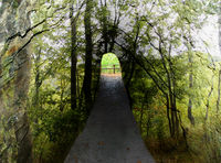 Tunnel through a mountain in the forest