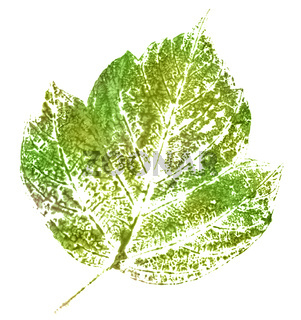 green stamp of leaf