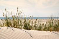 Dune with sand waves and fine beach grass