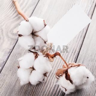 Cotton organic textile
