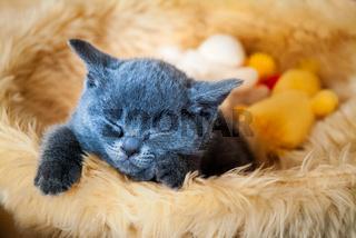 Kätzchen schläft im Korb