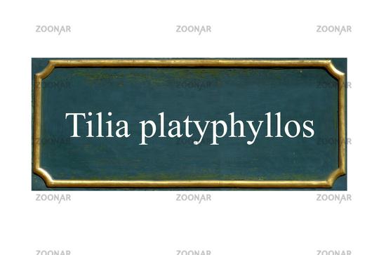 shield summer linden, Tilia platyphyllos, local Dud