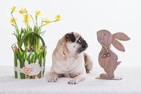Happy Easter Pug