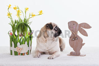 Happy Easter Pug