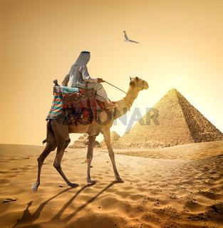 Bedouin and bird
