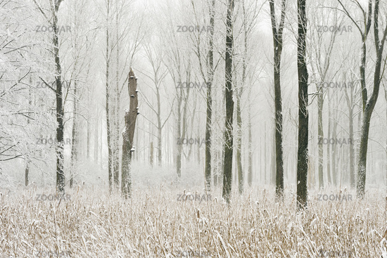 Swamp forest... Onset of winter *Germany*
