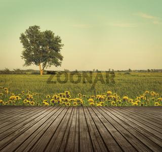 Wooden table top in open fields of dandelions