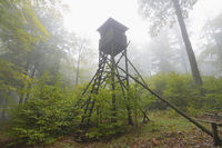 Hunting Blind in misty forest