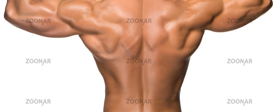 Attractive male back of body builder on white background