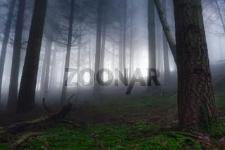 Herbstlicher Wald im Nebel