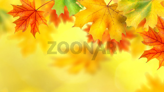 backround with autumn leaves