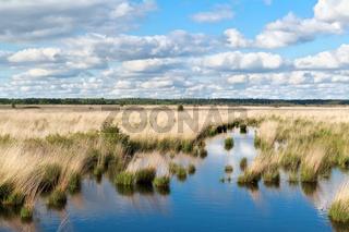 blue sky over swamp water