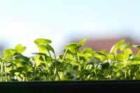 Green seedlings on sunlight