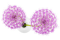 top view of purple flowers in vase isolated on white background. 3d illustration