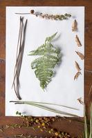 plants  picture