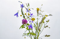 a bouquet of fresh colorful wild flowers on a white background.