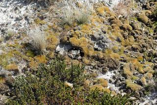 Bewuchs einer Düne auf Sylt im Frühjahr