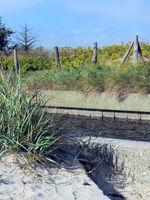 Dunes Near The Oldenburger Graben
