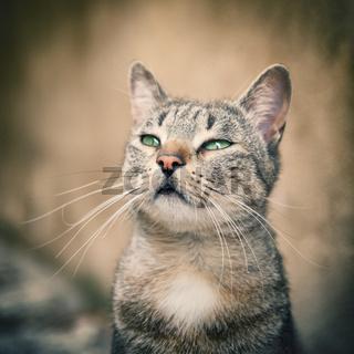 Portrait striped tabby cat - small focus