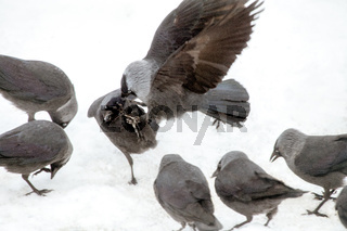 Bird aggression
