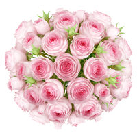 top view of bouquet of pink roses isolated on white background