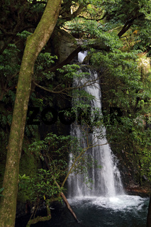Waterfall Salto do Prego in a laurel forest on Sao Miguel island, Azores