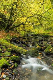 Silberbachtal Teutoburger Wald