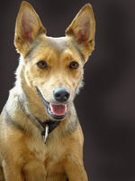 Dog Lotti