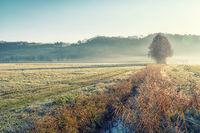 Low fog in sunday morning