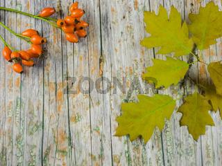 Herbstlicher Hintergrund mit Textfreiraum