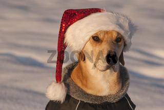 Portraet Weihnachtshund im Schnee
