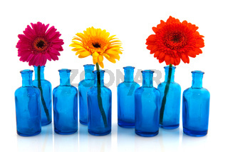 Row blue glass vases with colorful Gerber