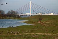 Goose am Niederrhein