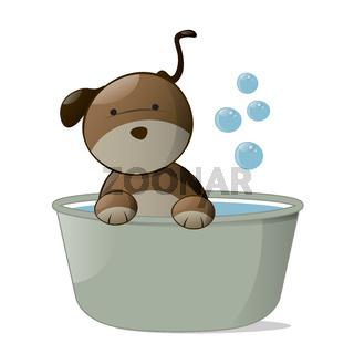 Wash Dog.